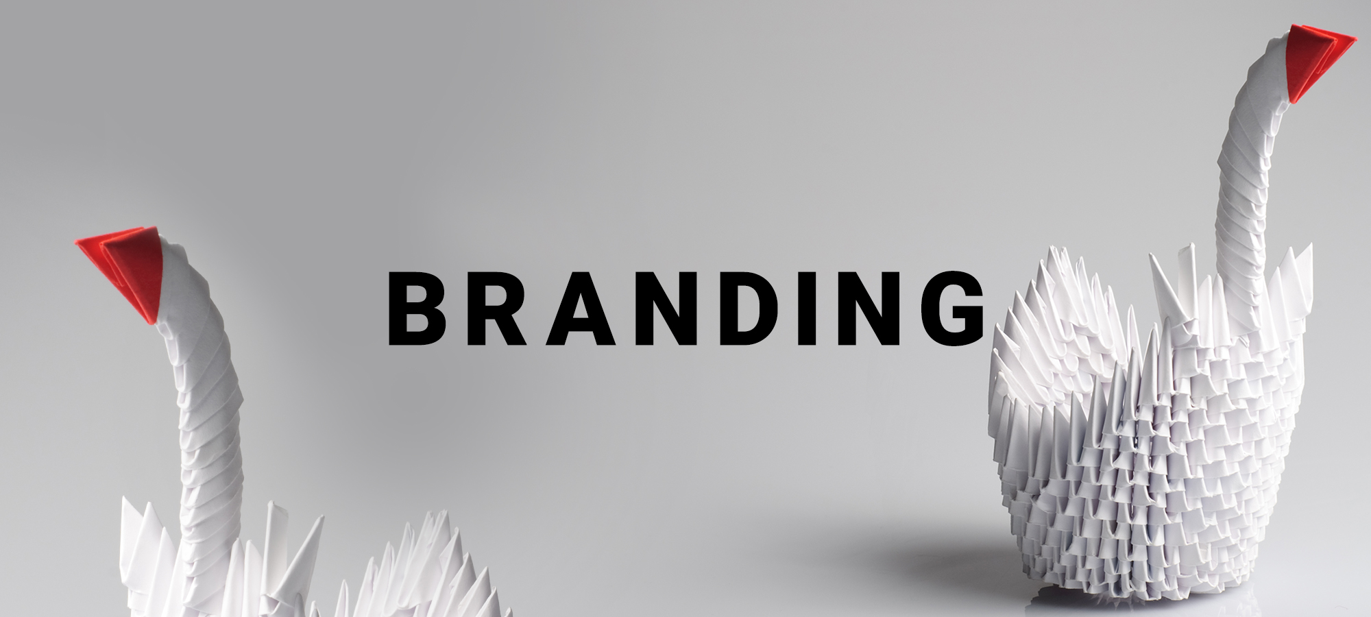 Branding step creativo cigni